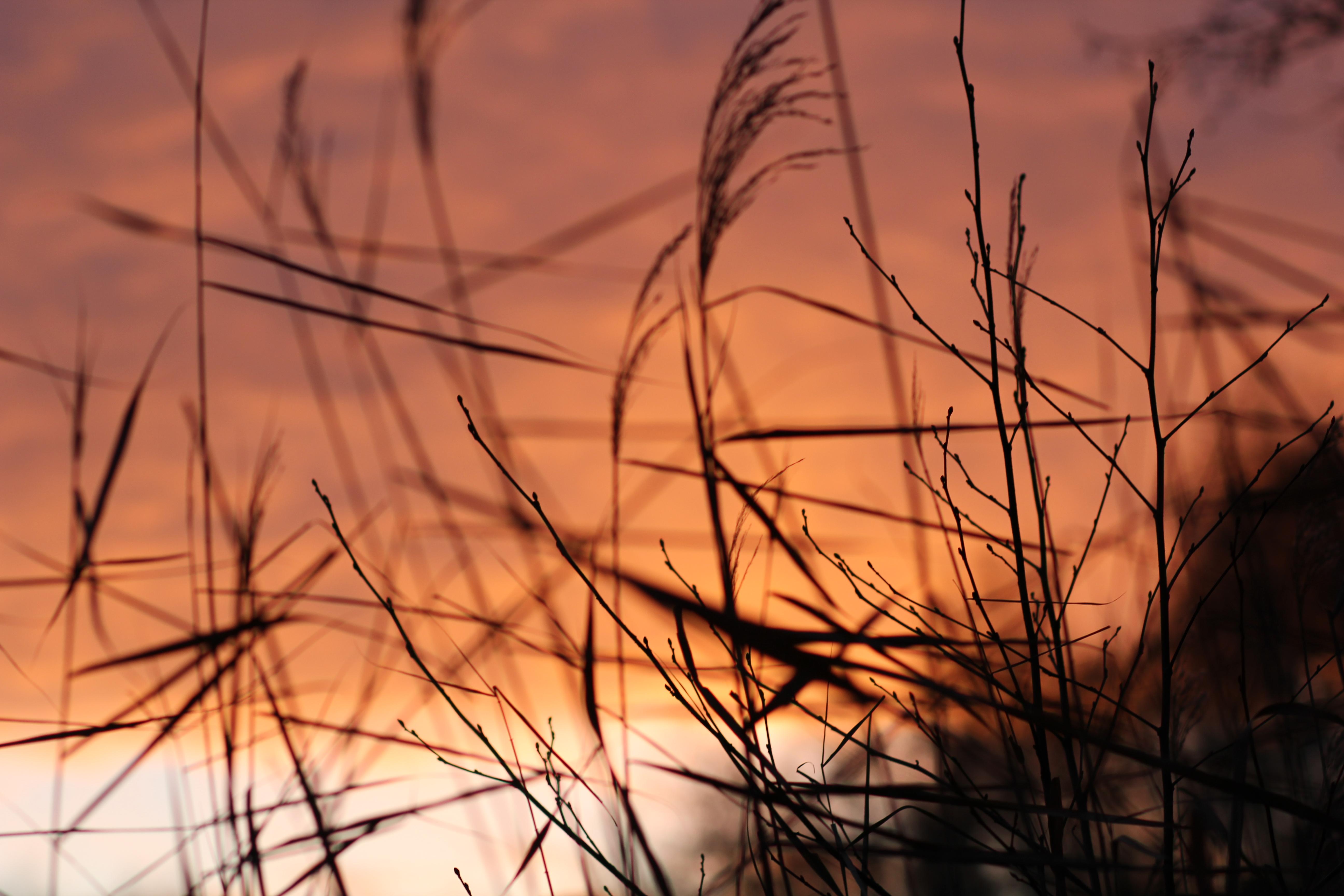 30+ Background ảnh thiên nhiên chất lượng cao