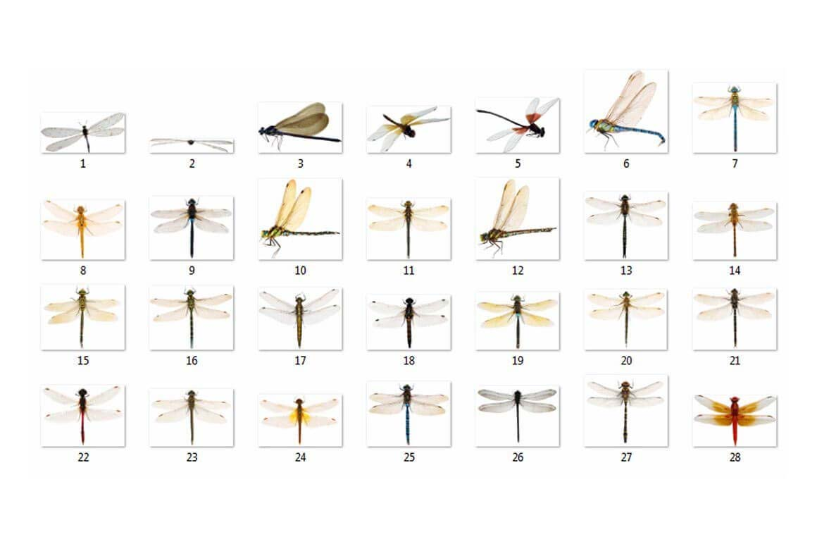 30 Overlay con chuồn chuồn tuyệt vời 30 Overlay con chuồn chuồn tuyệt vời