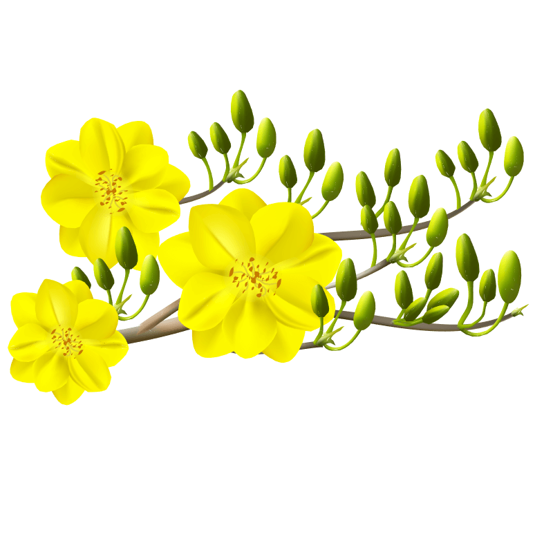 Vector hoa mai vàng miễn phí