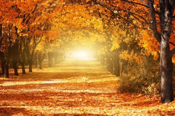 3 hình ảnh khu rừng mùa thu lá vàng chất lượng cao trên Shutterstock